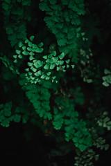 DSCF1421 (四月の孤狼) Tags: fujifilmxt20 fujifilmxf55200mmf3548rlmois flower lotus snap travel xf55200 xt20 macao macau photo plant snapshot tree 中国澳门 中國澳門 攝影 旅行 植物 樹 澳門 澳門特別行政區 澳门特别行政区 照片 花 荷花 遊攝 馬交 马交