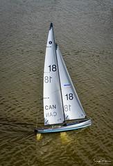 T37 Model Yacht Racing - London's Landing (SonjaPetersonPh♡tography) Tags: steveston stevestonchannel waterway londonslanding richmond bc britishcolumbia canada nikon nikond5300 nikonafsdxnikkor18300mmf3556gedvr modelyachts remotecontrolled river fraserriver race club yachtclub skill sails sailboats boats competition t37 t37modelyachtrace water waterreflections fleet
