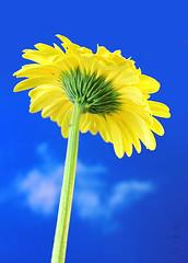 Bloom (gibalgis) Tags: bloom flower blue sky alone tall vertical yellow giba
