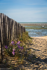 Clôture de bord de mer (MP Photographies) Tags: smileonsaturday fancyfence