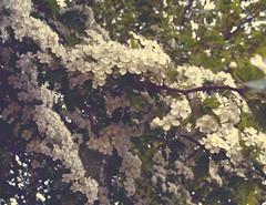 Fruhling Fest (Clive Varley) Tags: springtime nikond7000 affinityphotobeta april2019