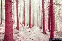 HEIDELBERG (01dgn) Tags: heidelberg almanya germany deutschland forest wald magic travel badenwürttemberg königstuhl