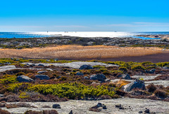 Coastal Layers (bjorbrei) Tags: water sea ocean horizon coast shore seashore rock heather reed reeds marsh backlight brattestø viker landfasten asmaløy hvaler norway