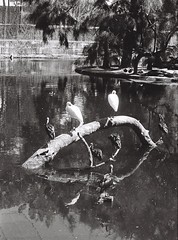 Wetlands 2 (adam_h_photo) Tags: halfframe olympuspenft monochrome film filmphotography 35mm analogue analog photofilmy ishootfilm istillshootfilm blackandwhite