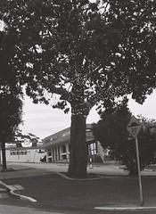 Tree (adam_h_photo) Tags: halfframe olympuspenft monochrome film filmphotography 35mm analogue analog photofilmy ishootfilm istillshootfilm blackandwhite