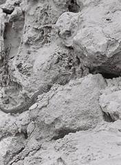 Reptile 2 (adam_h_photo) Tags: halfframe olympuspenft monochrome film filmphotography 35mm analogue analog photofilmy ishootfilm istillshootfilm blackandwhite