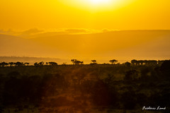 GE0A4319 (fredericleme) Tags: safari safarigame bigfive southafrica africa rsa wild wildlife nature reserve game thanda preservation sunset