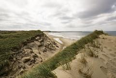 (Richter.V) Tags: düne strand nordsee dänemark sand gras norrevorupör