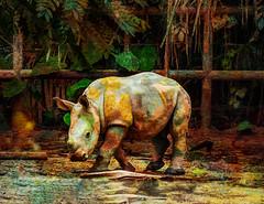 I Thought it Was a Mud Bath (Steve Taylor (Photography)) Tags: rhino baby rhinocerous enclosure jungle animal mammal digitalart colourful weird odd strange mudbath asia singapore bush fence texture zoo