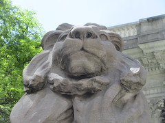 2019 Lion Under Shady Branches New York Public Library 8733 (Brechtbug) Tags: 2019 lions new york public library statues lion hanging shadows 42nd street 5th avenue nyc 05182019 may springtime soon spring weather eventually animal cat feline statue sculpture art cats ave st gargoyles gargoyle reclining repose resting facade stairs front entrance