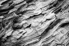 Driftwood detail (138/365) (johnstewartnz) Tags: 138365 day138 onephotoaday onephotoaday2019 365project project365 7d 7d2 7dmarkii canoneos7dmarkii 2470 2470mm canon ef wood driftwood bw blackandwhite blackwhite monochrome oneaday canon7dmarkii canoneos7dmkii