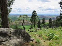View from Kamiak Butte (bencbright) Tags: kamiakbutte palouse view landscape pine ponderosa spring sx60 canonsx60 bonsai clouds