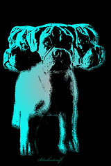 Cerberus (blackcatcraft) Tags: cerberus three dogs surrealism popart