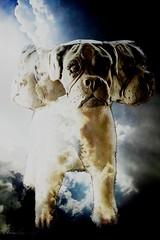 20 of 2019 Surreal (blackcatcraft) Tags: cerberus threeheadsarebetterthanone dog surrealism layers week202019 startingtuesdaymay142019 52weeksthe2019edition