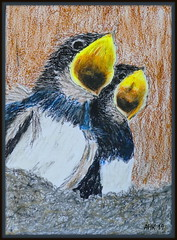 Hungrige Schwalbenkinder - Hungry swallow children (antje whv) Tags: malerei painting drawing ölpastellkreide pastel schwalben swallows vögel birds tiere animals