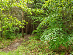 Alice Holt-F5180233 (tony.rummery) Tags: aliceholt em5mkii forest hampshire mft microfourthirds omd olympus path trees farnham england unitedkingdom