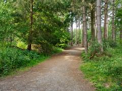 Alice Holt-F5180235 (tony.rummery) Tags: aliceholt em5mkii forest hampshire mft microfourthirds omd olympus path trees farnham england unitedkingdom