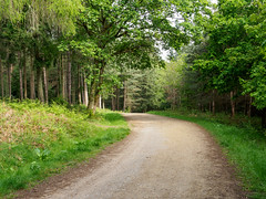 Alice Holt-F5180237 (tony.rummery) Tags: aliceholt em5mkii forest hampshire mft microfourthirds omd olympus path trees farnham england unitedkingdom
