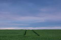 Path (ulbespaans) Tags: less lessismore lessismoreoutdoors minimal minimalistic minimalism minimalisticart minimalismo minimalismus minimalisme minimalismart landscape landscapephotography contemporaryphotography path agriculture