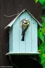 (jesuisnathan) Tags: bird oiseau niche chenille nature