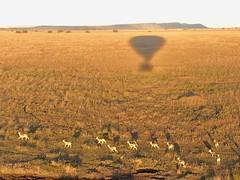 (晒晒太阳不长虫) Tags: tanzania serengeti balloon gazelle aerialphotography