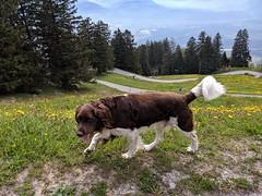 IMG_20190518_105825 (WeatherMaker) Tags: schweiz switzerland hoher kasten alpen wandern