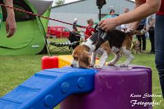 2019-05-19_Beagle Spektakel Heteren_KS-20