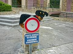 Devant l'égise - In front of the church (p.franche malade - Sick) Tags: chien panneaudesignalisation interdit église streetshot panasonic dog roadsign forbidden church