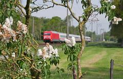 Eingerahmt (Klaus Z.) Tags: eisenbahn kbs 395 br 101 leer ostfriesland personenzug intercity db fernverkehr frühling