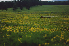 heaven is a place on earth III (Damla Özcan) Tags: mountain nature spring flowers heaven landscape tableland wildflower wild life canon eos 5d mark ii 50mm f14