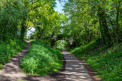 Bluebell Woodland Walk - Kenilworth Greenway - 18 May 2019 (Friends of Canley Green Spaces) Tags: canleygreenspaces canley coventry cv4 warwickuniversity warwickvolunteers walk woodland trees