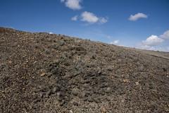 70 Mile Butte Trail - DSC_3470a (Markus Derrer) Tags: 70milebutte grasslands grasslandsnationalpark saskatchewan may markusderrer hikingtrail cactus pricklypear