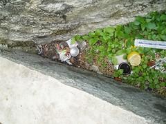 Čišćenje infektivnog otpada 01 12 2007 kapetanski (31)