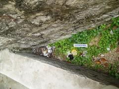 Čišćenje infektivnog otpada 01 12 2007 kapetanski (30)