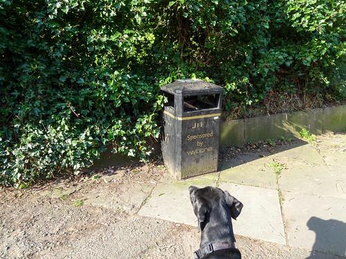 Dog looking at a bin, 2019 Apr 20
