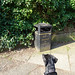 Dog looking at a bin, 2019 Apr 20