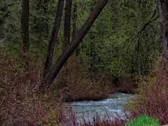 Hidden-A Closer Look (Robert Cowlishaw (Mertonian)) Tags: mertonian robertcowlishaw parasophia canon powershot sx70hs photophari wilderness nature canonpowershotsx70hs ineffable awe wonder beauty beautiful lush mysterious spring2019