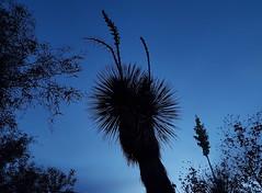 Indigo Blue (jeffcbowen) Tags: cactus tucson arizona bluehour mobile cell sonorandesert desert nature