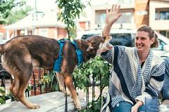 Stella and Michelle (M///S///H) Tags: 35mm jp jeanpierrepopovi lenstagger michellepopovoi bite co colorado denver dog friends kaospizza kaospizzeria nivanuatu pearlstreet play portrait puppy stella zeisscy zeisscy35mmf14