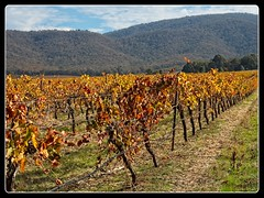 Wineries in the Pyrenees (wmikef) Tags: autumn australia victoria pyrenees vineyard winery