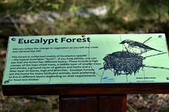 Russo Nature Park [Bundaberg] (Dreaming of the Sea) Tags: russopark sign nikon nikond5500 nikkor18200mm bokeh dof depthoffield green bundaberg 2019 robin eucalyptforest queensland australia