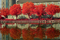 Reflections of Spring Along the Erie Canal (infrared) (dr_marvel) Tags: double spring ir infrared rochester ny pittsford newyork trees red reflections canal eriecanal water waterway