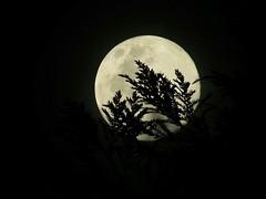 Luna (daelext7) Tags: luna moon photograpy fotodetalle fotografia
