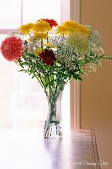 Still Life (Pedja Photo (Pedja G)) Tags: flowers vaze stilllife predragg pedjag pedjaphotography sonyalpha a77ii sonysal70300mmg alpha77ii amount