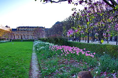 518 Paris en Mars 2019 - dans le Jardin du Palais Royal (paspog) Tags: paris france palaisroyal jardin jardindupalaisroyal mars march märz 2019