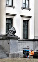 onder toezicht (roberke) Tags: persoon people gebouw huis leeuw lion statue standbeeld street straat windows ramen stairs trappen stadhuis cityhall dordrecht dordt nederland netherlands