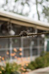 Stitch the Sugar Glider. (LisaDiazPhotos) Tags: cheetah behind scenes wildlife workshop stitch sugarglider animal ambassador lisadiazphotos sandiegozoo sandiegozooglobal sandiegozoosafaripark sdzsafaripark sdzoo sdzsp