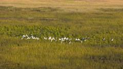 Birding from the air (Jennie Stock) Tags: helicoptertrip maun landscape leptoptiloscrumeniferus okavango aerial greatwhitepelican maraboustork pelecanusonocrotalus