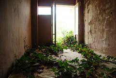 Life returns (jimiliop) Tags: abandoned lif hotel room building light walls plant door decay