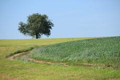 Verte campagne (Croc'odile67) Tags: nikon d3300 sigma contemporary 18200dcoshsmc paysage landscape campagne champ prairie arbre tree ciel sky chemin
